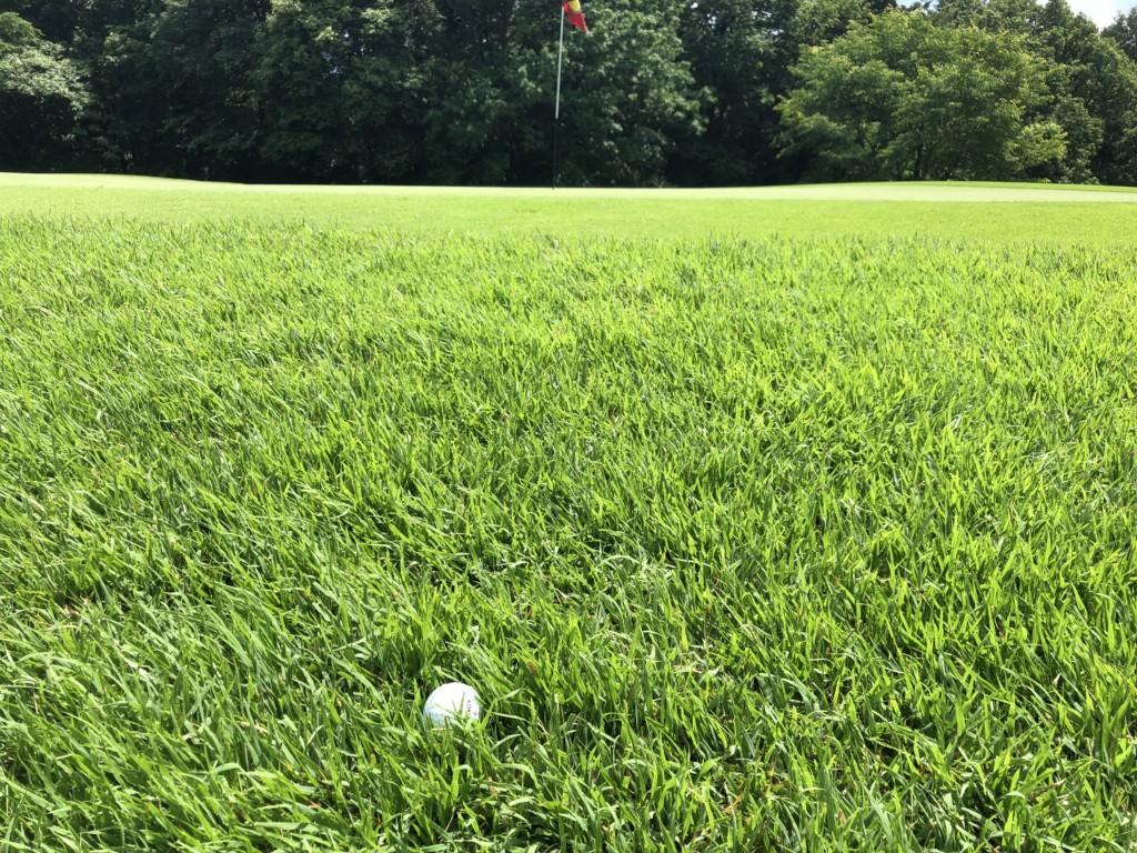 草, 屋外, スポーツゲーム, スポーツ が含まれている画像  自動的に生成された説明